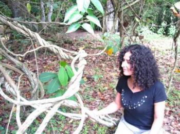 Ayahuasca planta
